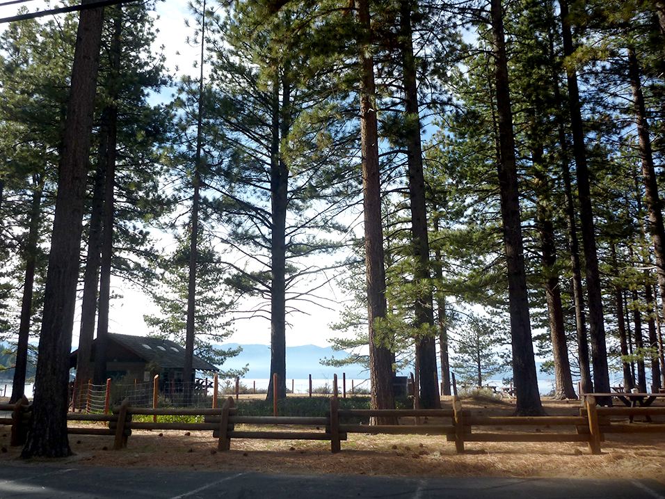 Lake Tahoe trees