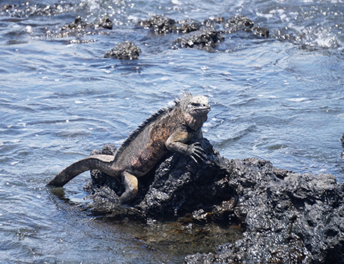 The Best Way to see Galápagos Islands